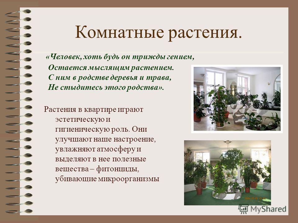 Комнатные растения. Растения в квартире играют эстетическую и гигиеническую роль. Они улучшают наше настроение, увлажняют атмосферу и выделяют в нее полезные вещества – фитонциды, убивающие микроорганизмы «Человек, хоть будь он трижды гением, Остаетс