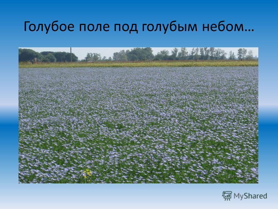 Голубое поле под голубым небом…