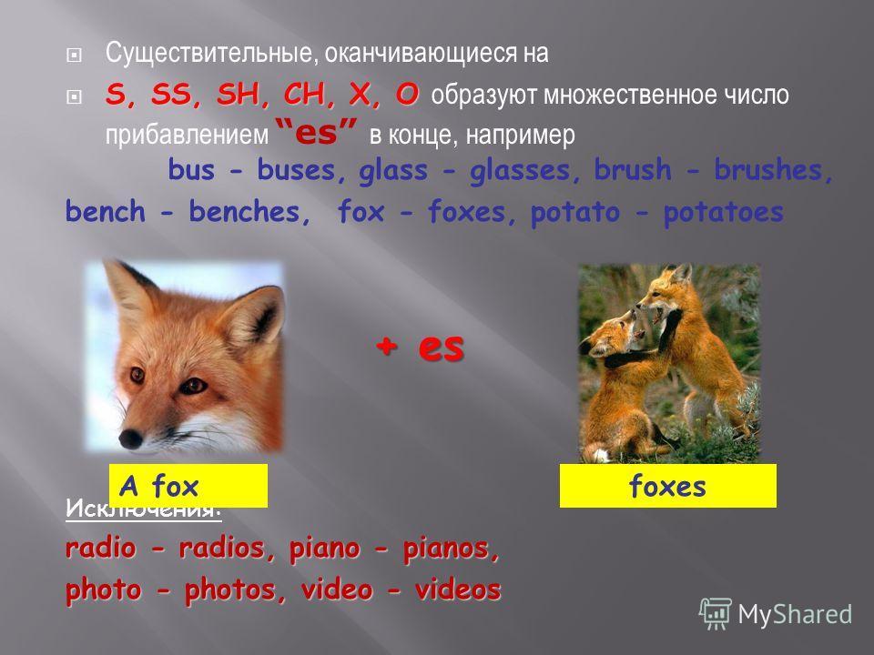 Существительные, оканчивающиеся на S, SS, SH, CH, X, O S, SS, SH, CH, X, O образуют множественное число прибавлением es в конце, например bus - buses, glass - glasses, brush - brushes, bench - benches, fox - foxes, potato - potatoes Исключения: radio