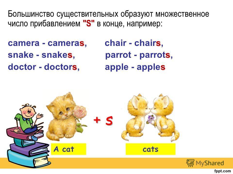 S ss Большинство существительных образуют множественное число прибавлением S в конце, например: camera - cameras, chair - chairs, ss snake - snakes, parrot - parrots, ss doctor - doctors, apple - apples A catcats + s