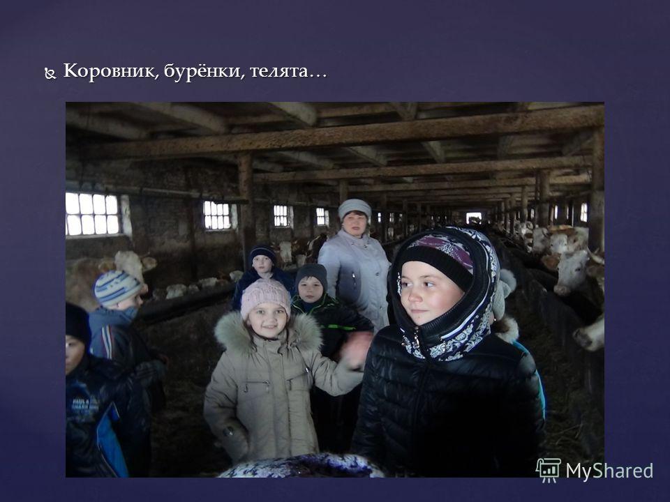 Коровник, бурёнки, телята… Коровник, бурёнки, телята…