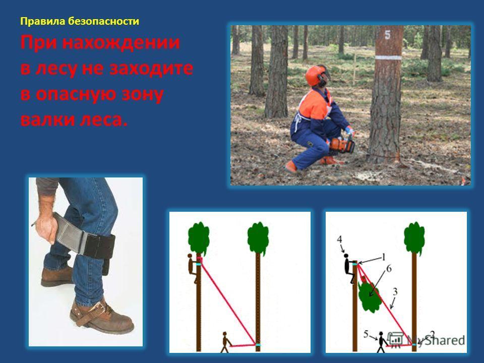 Правила безопасности При нахождении в лесу не заходите в опасную зону валки леса.