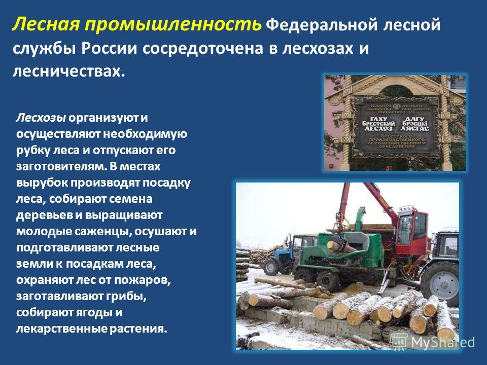 Лесная промышленность Федеральной лесной службы России сосредоточена в лесхозах и лесничествах. Лесхозы организуют и осуществляют необходимую рубку леса и отпускают его заготовителям. В местах вырубок производят посадку леса, собирают семена деревьев