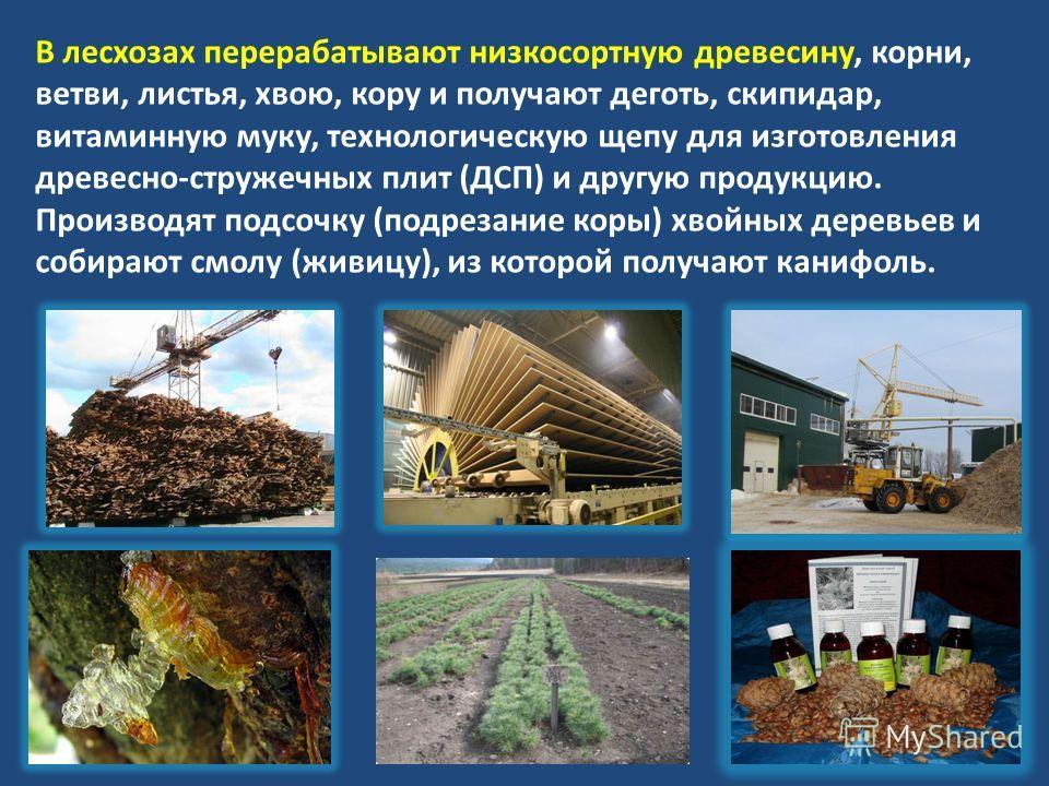 В лесхозах перерабатывают низкосортную древесину, корни, ветви, листья, хвою, кору и получают деготь, скипидар, витаминную муку, технологическую щепу для изготовления древесно-стружечных плит (ДСП) и другую продукцию. Производят подсочку (подрезание