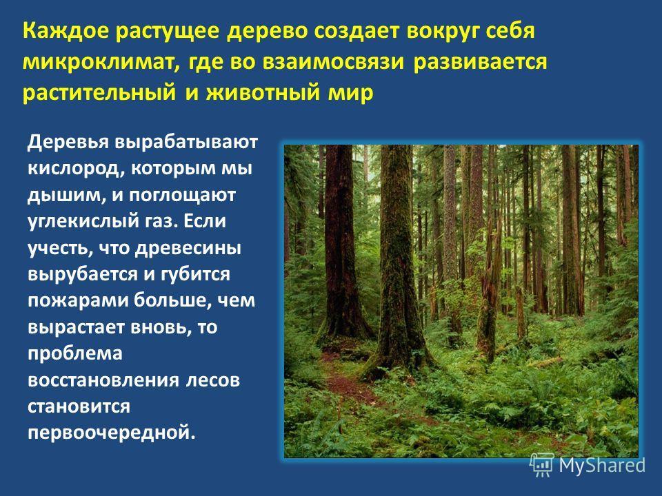 Каждое растущее дерево создает вокруг себя микроклимат, где во взаимосвязи развивается растительный и животный мир Деревья вырабатывают кислород, которым мы дышим, и поглощают углекислый газ. Если учесть, что древесины вырубается и губится пожарами б