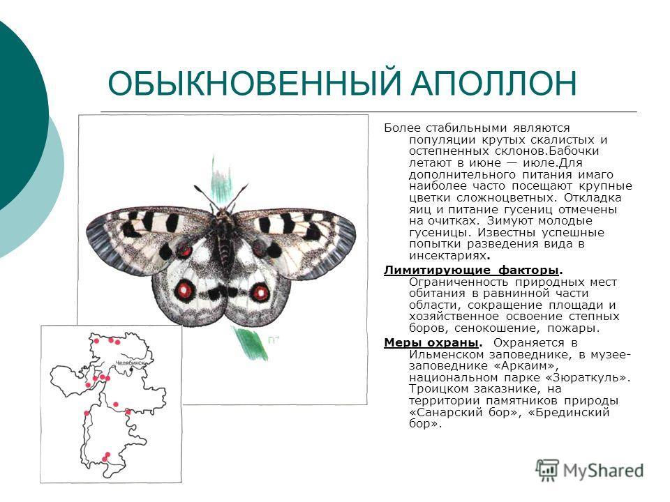 ОБЫКНОВЕННЫЙ АПОЛЛОН Более стабильными являются популяции крутых скалистых и остепненных склонов.Бабочки летают в июне июле.Для дополнительного питания имаго наиболее часто посещают крупные цветки сложноцветных. Откладка яиц и питание гусениц отмечен