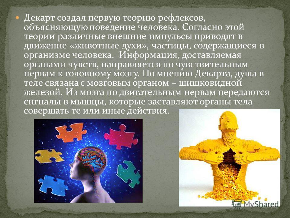 Декарт создал первую теорию рефлексов, объясняющую поведение человека. Согласно этой теории различные внешние импульсы приводят в движение «животные духи», частицы, содержащиеся в организме человека. Информация, доставляемая органами чувств, направля