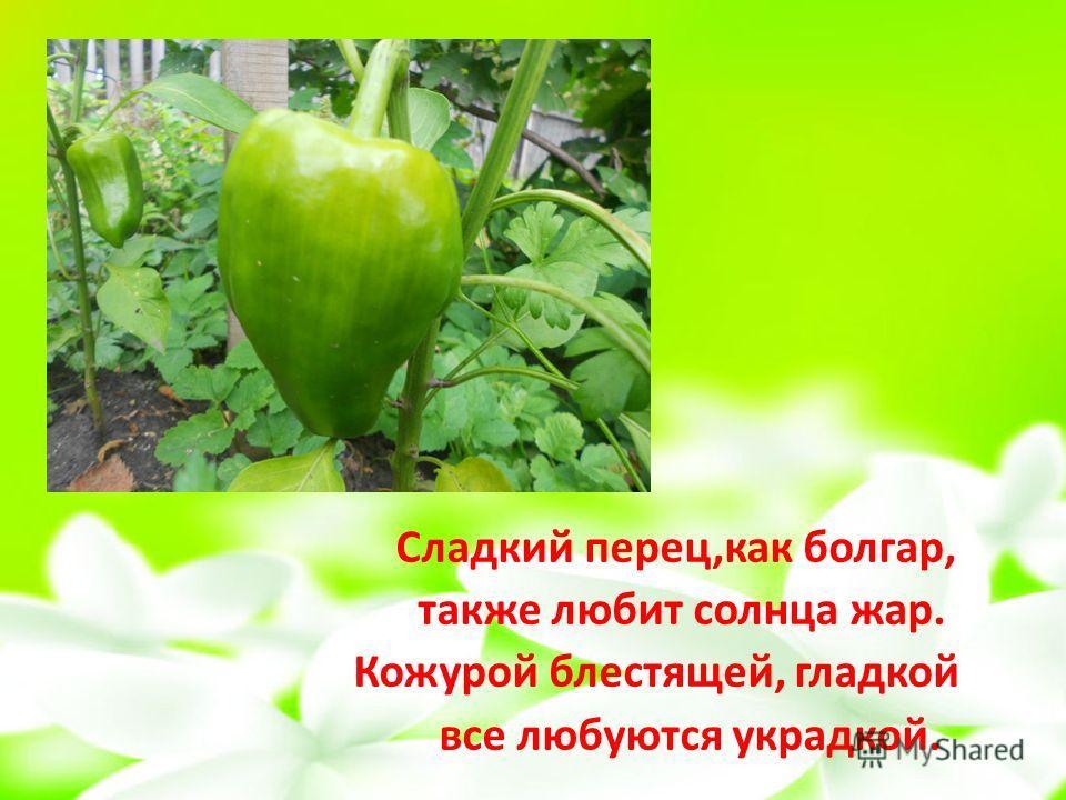 Сладкий перец,как болгар, также любит солнца жар. Кожурой блестящей, гладкой все любуются украдкой.