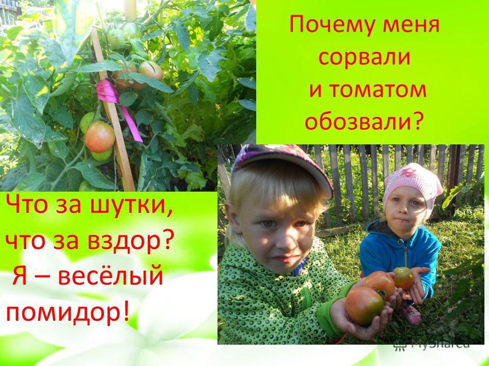 Почему меня сорвали и томатом обозвали? Что за шутки, что за вздор? Я – весёлый помидор!