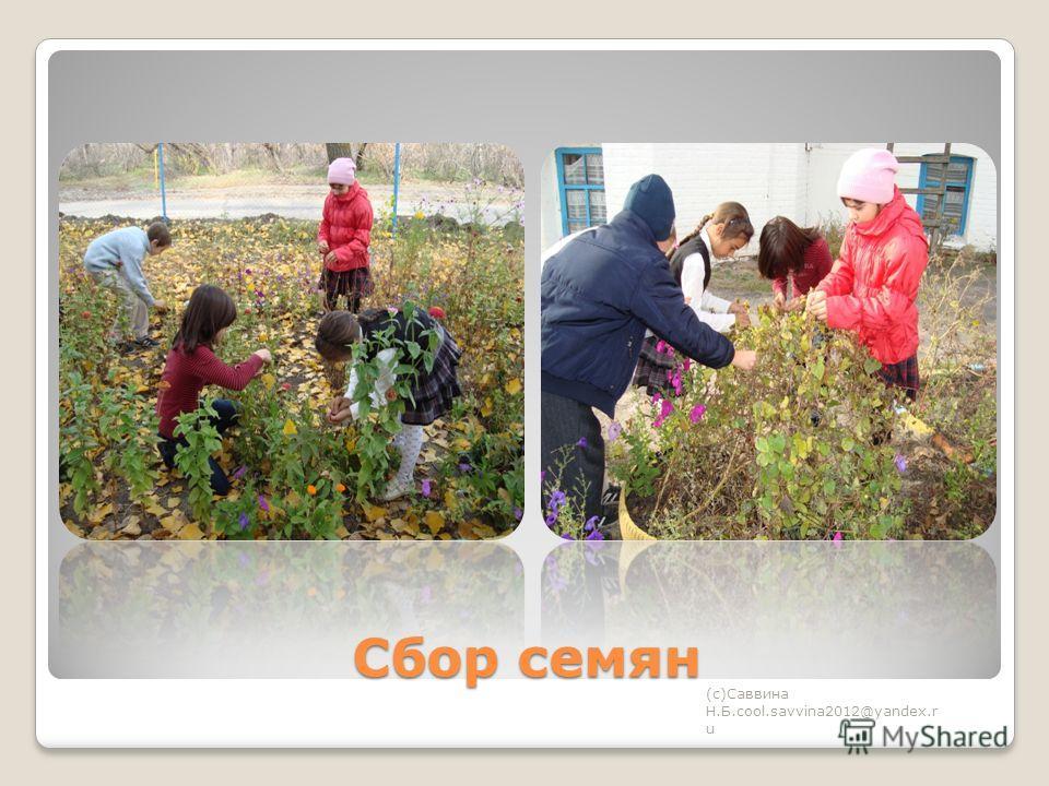 Сбор семян (с)Саввина Н.Б.cool.savvina2012@yandex.r u