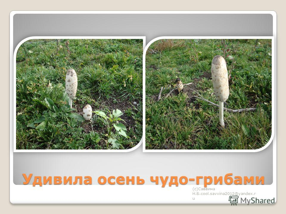 Удивила осень чудо-грибами (с)Саввина Н.Б.cool.savvina2012@yandex.r u