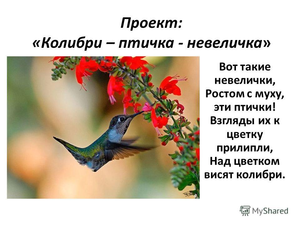 Проект: «Колибри – птичка - невеличка» Вот такие невелички, Ростом с муху, эти птички! Взгляды их к цветку прилипли, Над цветком висят колибри.