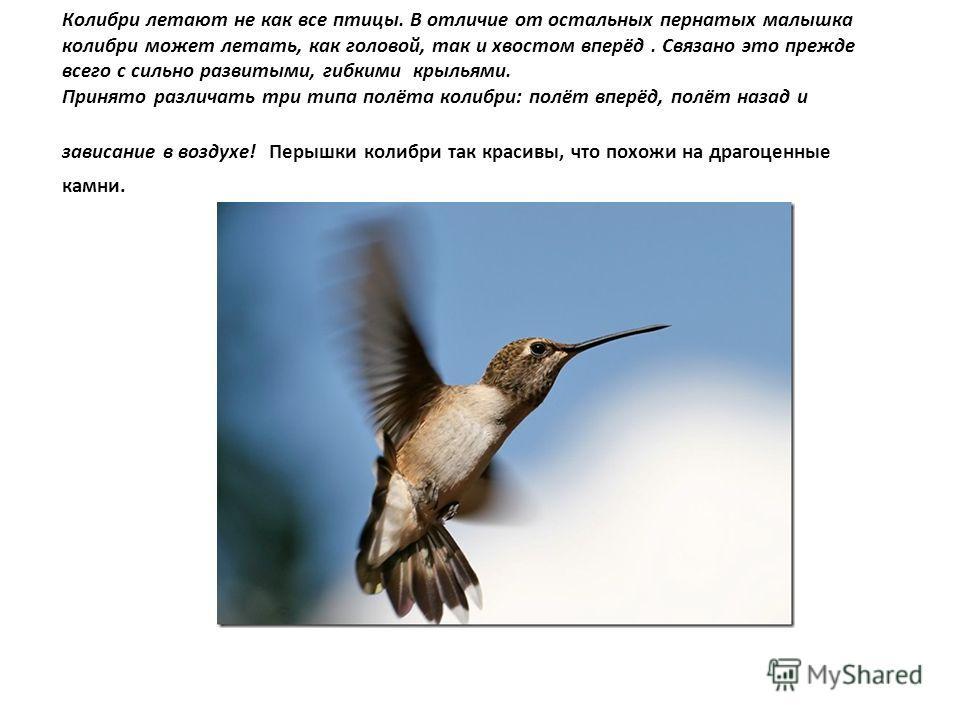 Колибри летают не как все птицы. В отличие от остальных пернатых малышка колибри может летать, как головой, так и хвостом вперёд. Связано это прежде всего с сильно развитыми, гибкими крыльями. Принято различать три типа полёта колибри: полёт вперёд,