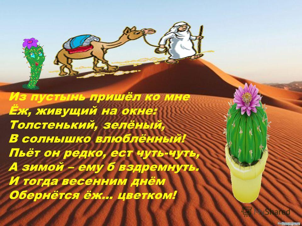 Из пустынь пришёл ко мне Ёж, живущий на окне: Толстенький, зелёный, В солнышко влюблённый! Пьёт он редко, ест чуть-чуть, А зимой – ему б вздремнуть. И тогда весенним днём Обернётся ёж... цветком!
