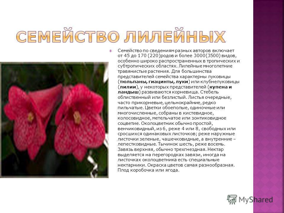 Семейство по сведениям разных авторов включает от 45 до 170 (220)родов и более 3000(3500) видов, особенно широко распространенных в тропических и субтропических областях. Лилейные многолетние травянистые растения. Для большинства представителей семей
