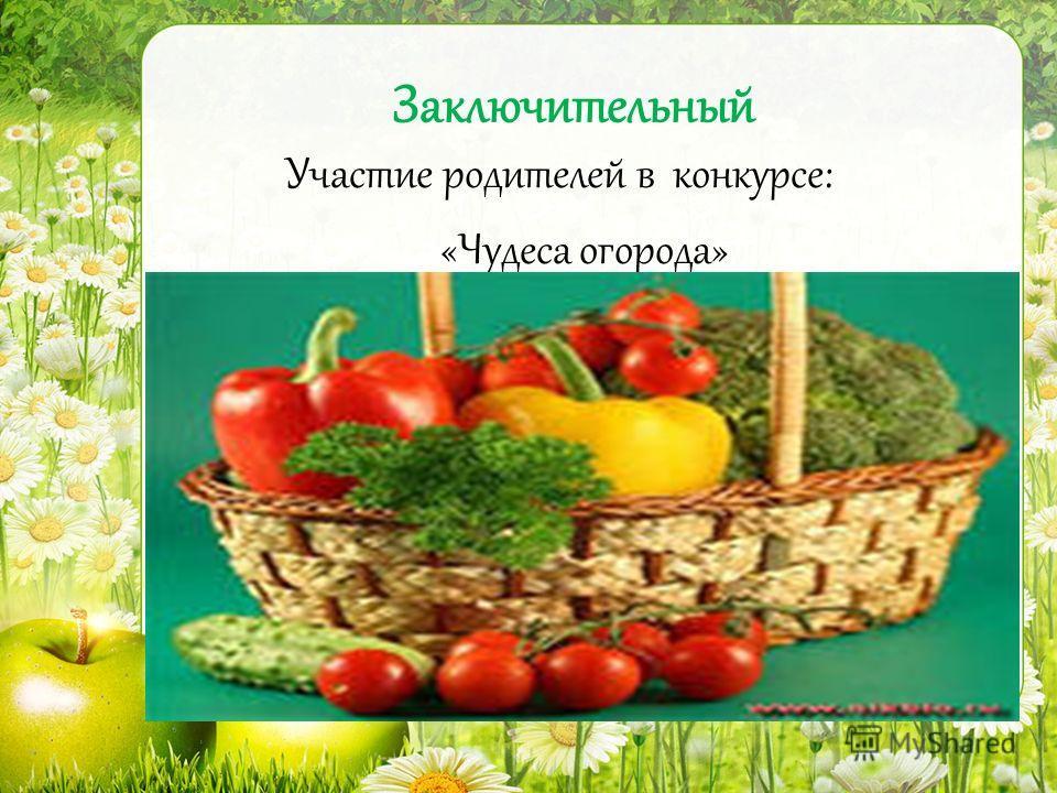 Заключительный Участие родителей в конкурсе: «Чудеса огорода»