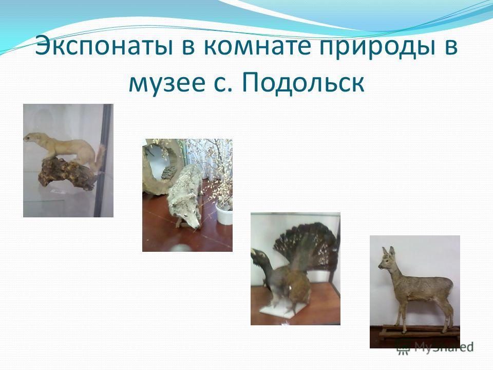 Экспонаты в комнате природы в музее с. Подольск