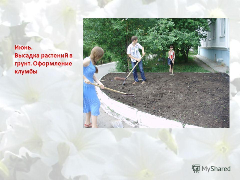 Июнь. Высадка растений в грунт. Оформление клумбы