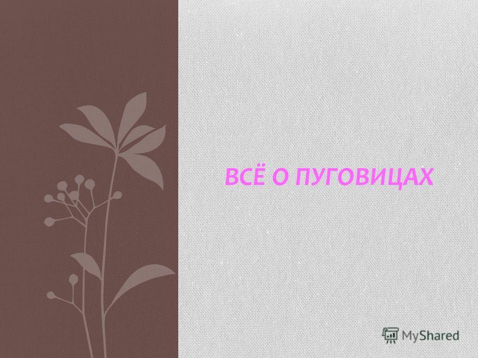 ВСЁ О ПУГОВИЦАХ