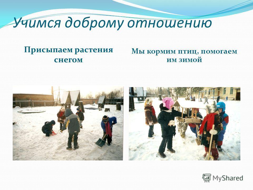 Учимся доброму отношению Присыпаем растения снегом Мы кормим птиц, помогаем им зимой