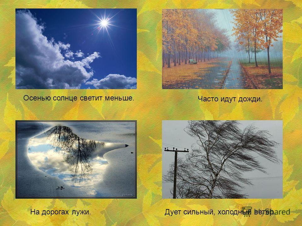 Осенью солнце светит меньше. Часто идут дожди. На дорогах лужи.Дует сильный, холодный ветер.