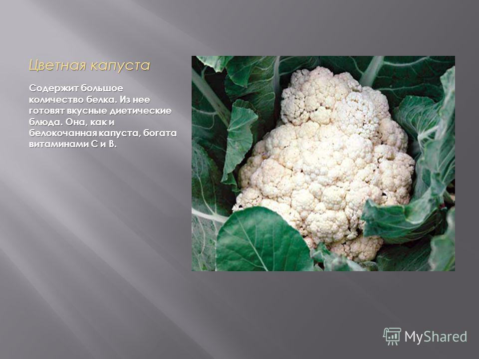 Цветная капуста Cодержит большое количество белка. Из нее готовят вкусные диетические блюда. Она, как и белокочанная капуста, богата витаминами С и В.