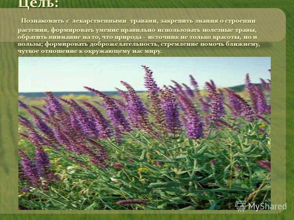 Цель: Познакомить с лекарственными травами, закрепить знания о строении растения, формировать умение правильно использовать полезные травы, обратить внимание на то, что природа – источник не только красоты, но и пользы; формировать доброжелательность