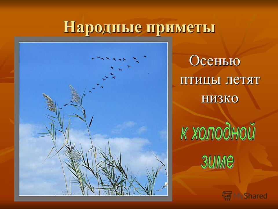 Народные приметы Осенью птицы летят низко