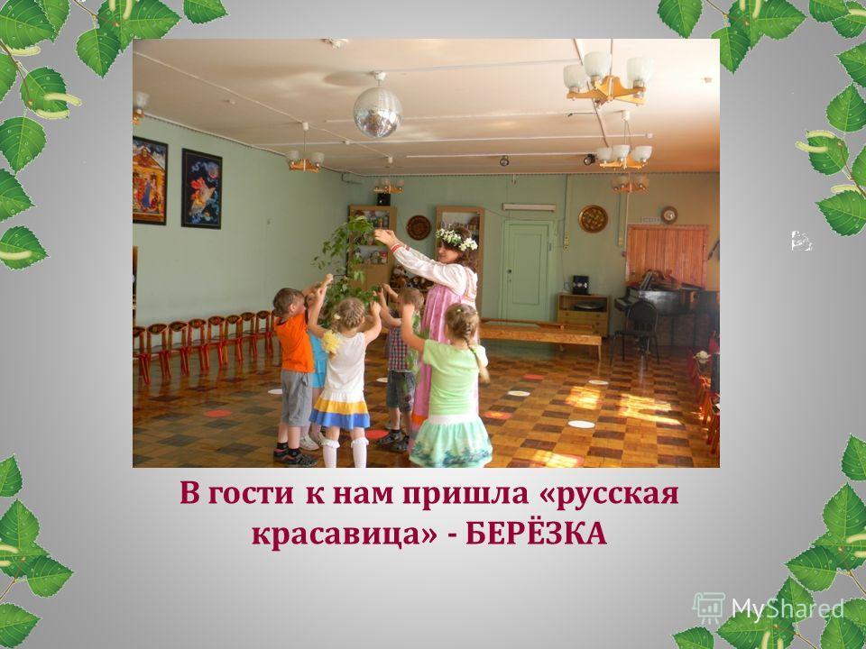 В гости к нам пришла «русская красавица» - БЕРЁЗКА