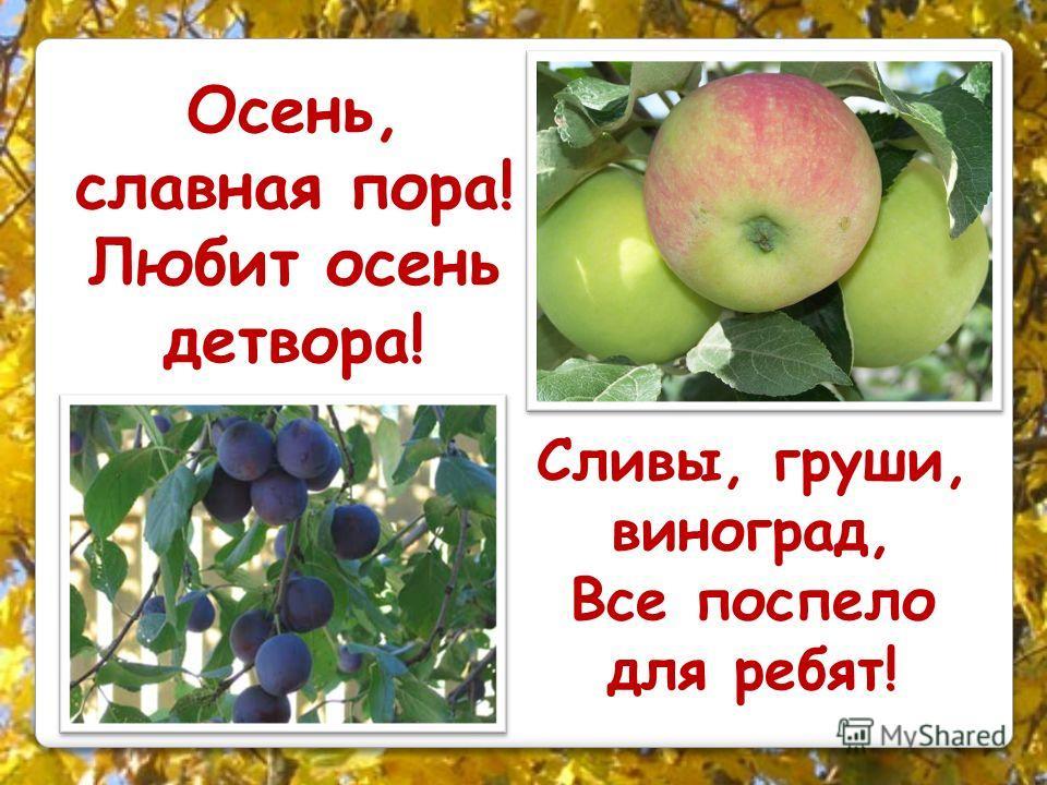 Осень, славная пора! Любит осень детвора! Сливы, груши, виноград, Все поспело для ребят!