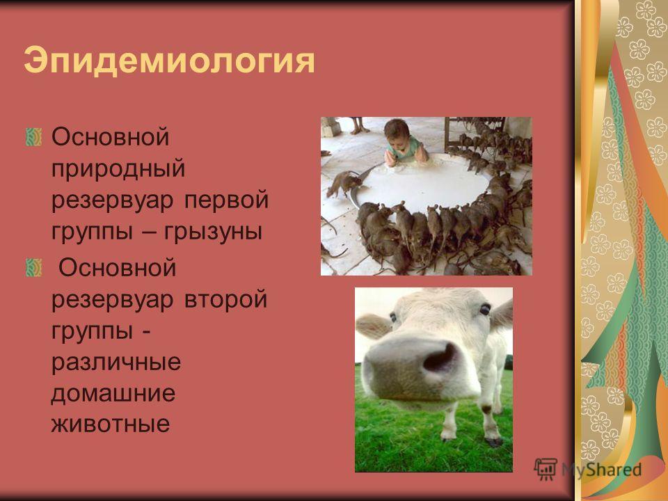 Эпидемиология Основной природный резервуар первой группы – грызуны Основной резервуар второй группы - различные домашние животные