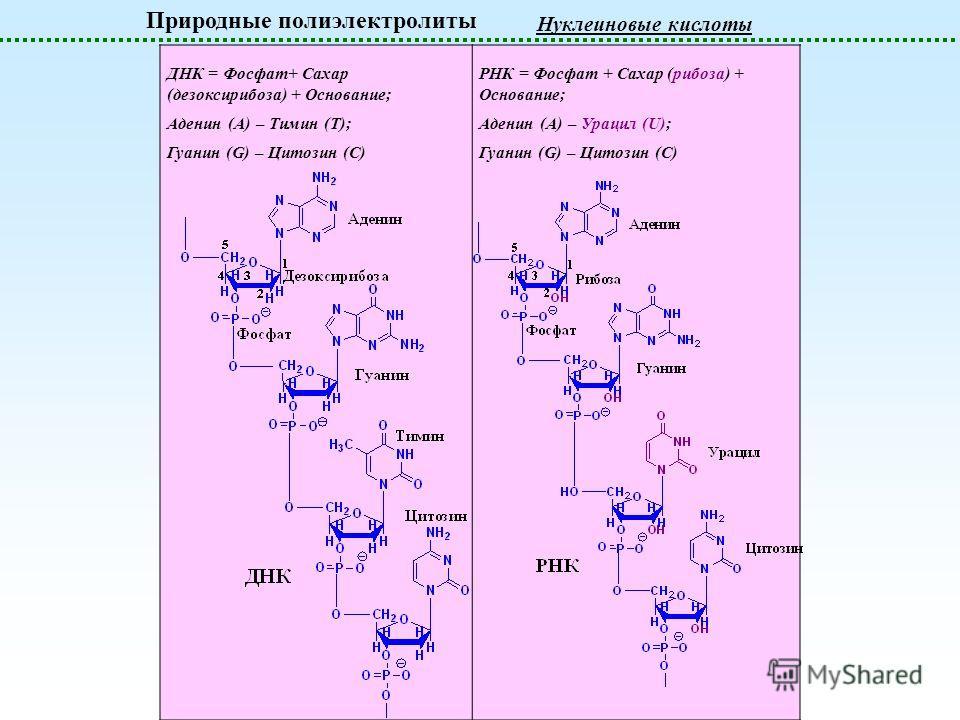 Природные полиэлектролиты Нуклеиновые кислоты ДНК = Фосфат+ Сахар (дезоксирибоза) + Основание; Аденин (A) – Тимин (T); Гуанин (G) – Цитозин (C) РНК = Фосфат + Сахар (рибоза) + Основание; Аденин (A) – Урацил (U); Гуанин (G) – Цитозин (C)