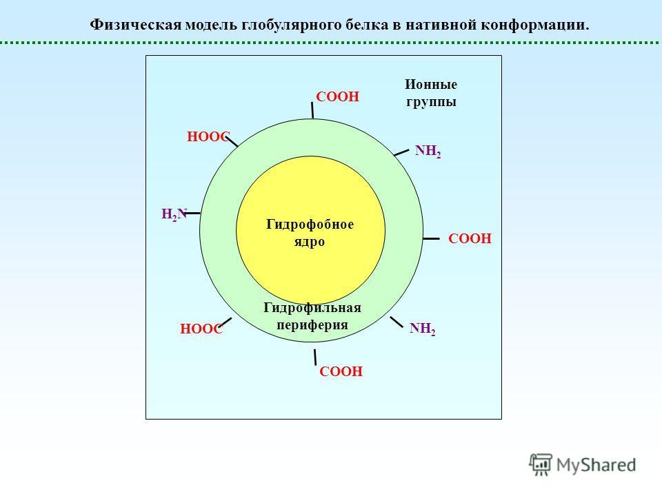 Физическая модель глобулярного белка в нативной конформации. Гидрофобное ядро COOH HOOC COOH NH2NH2 Гидрофильная периферия Ионные группы NH2NH2 H2NH2N