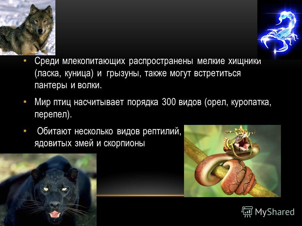 Среди млекопитающих распространены мелкие хищники (ласка, куница) и грызуны, также могут встретиться пантеры и волки. Мир птиц насчитывает порядка 300 видов (орел, куропатка, перепел). Обитают несколько видов рептилий, в том числе 3 вида ядовитых зме