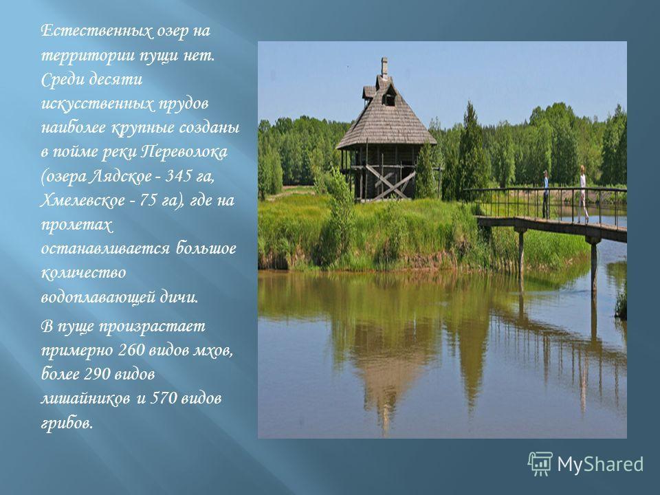 Естественных озер на территории пущи нет. Среди десяти искусственных прудов наиболее крупные созданы в пойме реки Переволока (озера Лядское - 345 га, Хмелевское - 75 га), где на пролетах останавливается большое количество водоплавающей дичи. В пуще п