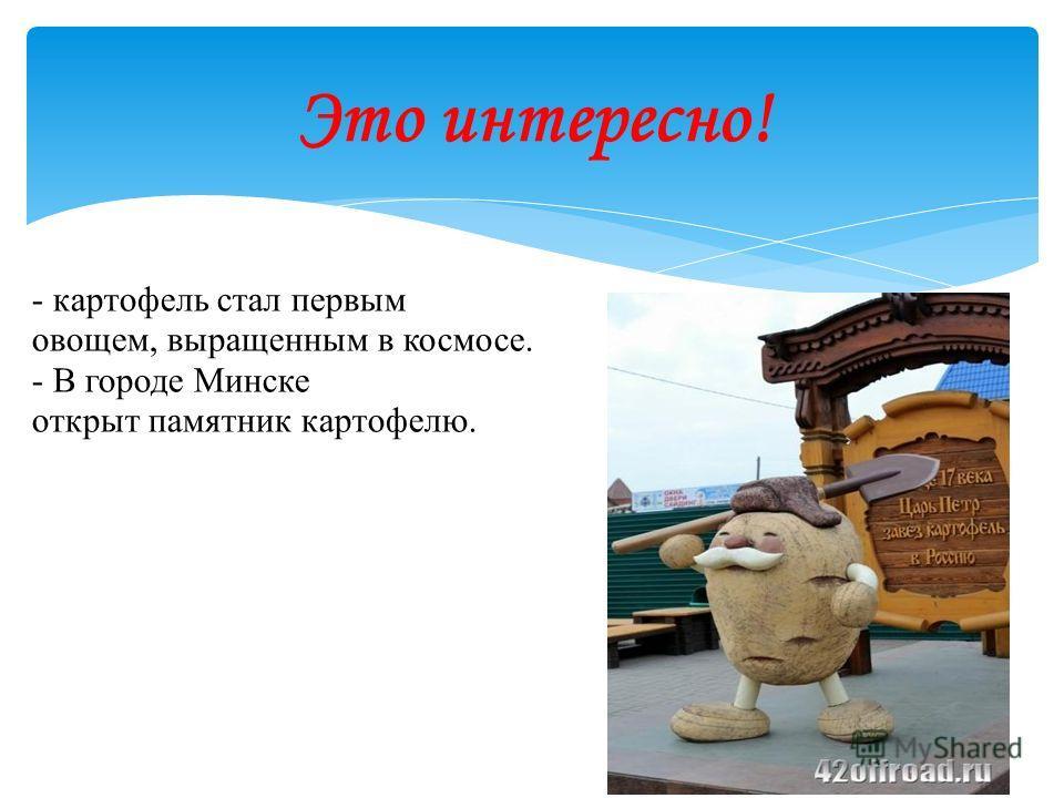 - картофель стал первым овощем, выращенным в космосе. - В городе Минске открыт памятник картофелю. Это интересно!