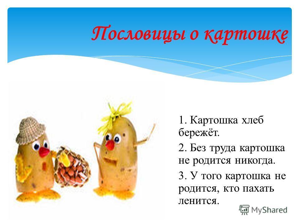 Пословицы о картошке 1. Картошка хлеб бережёт. 2. Без труда картошка не родится никогда. 3. У того картошка не родится, кто пахать ленится.
