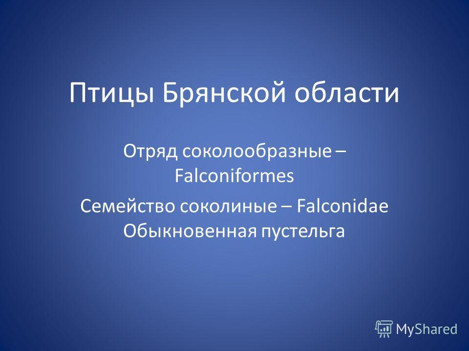 Птицы Брянской области Отряд соколообразные – Falconiformes Семейство соколиные – Falconidae Обыкновенная пустельга