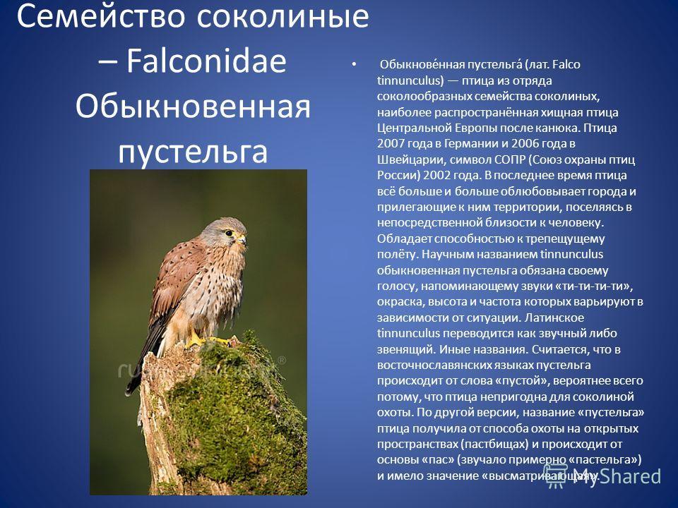 Обыкнове́нная пустельга́ (лат. Falco tinnunculus) птица из отряда соколообразных семейства соколиных, наиболее распространённая хищная птица Центральной Европы после канюка. Птица 2007 года в Германии и 2006 года в Швейцарии, символ СОПР (Союз охраны