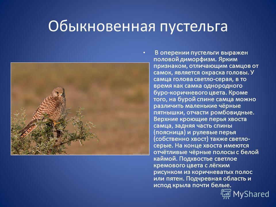 Обыкновенная пустельга В оперении пустельги выражен половой диморфизм. Ярким признаком, отличающим самцов от самок, является окраска головы. У самца голова светло-серая, в то время как самка однородного буро-коричневого цвета. Кроме того, на бурой сп