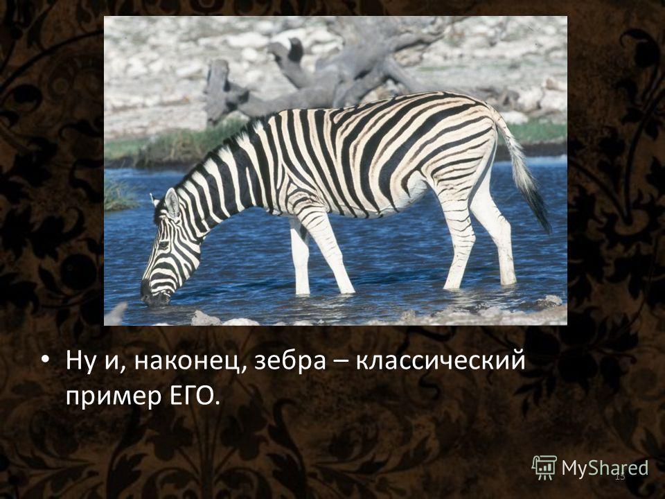 Ну и, наконец, зебра – классический пример ЕГО. 15