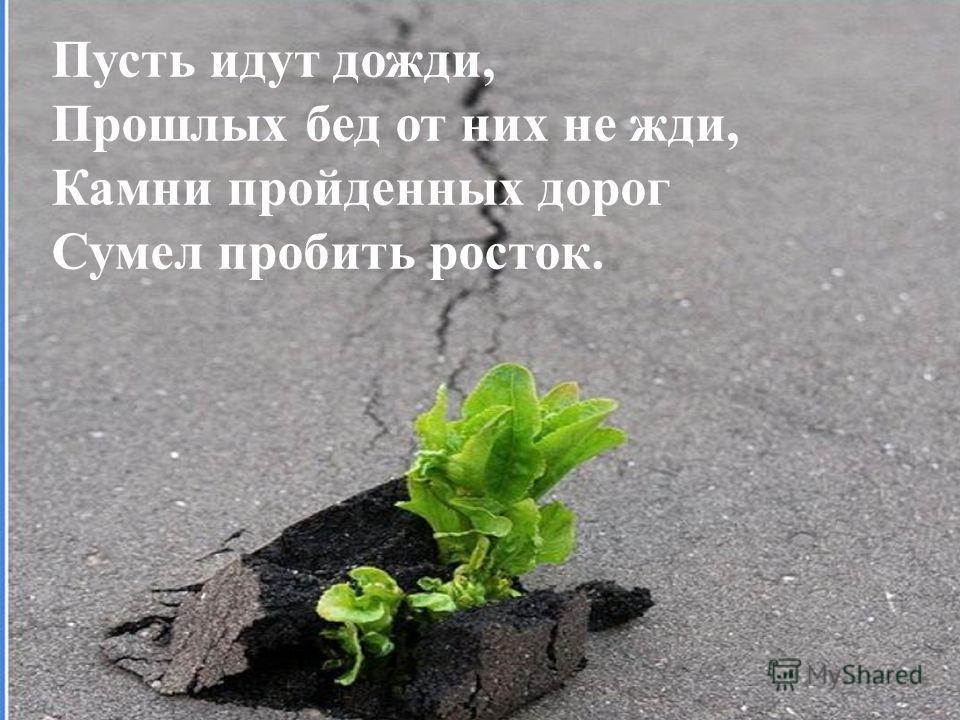 Пусть идут дожди, Прошлых бед от них не жди, Камни пройденных дорог Сумел пробить росток.