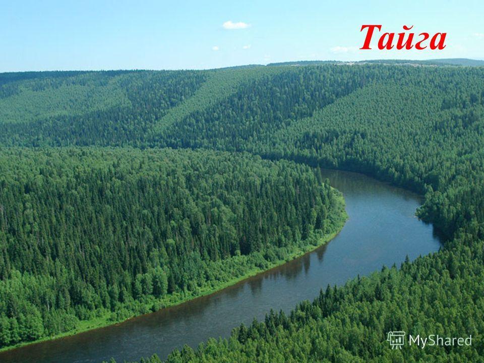 Четвертый конкурс- животный и растительный мир Тайга