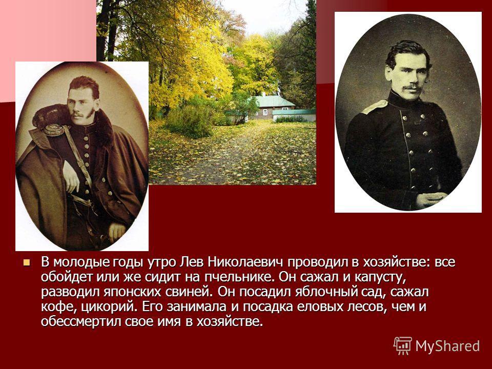 В молодые годы утро Лев Николаевич проводил в хозяйстве: все обойдет или же сидит на пчельнике. Он сажал и капусту, разводил японских свиней. Он посадил яблочный сад, сажал кофе, цикорий. Его занимала и посадка еловых лесов, чем и обессмертил свое им