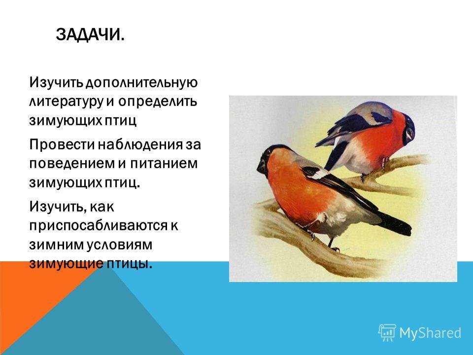Изучить дополнительную литературу и определить зимующих птиц Провести наблюдения за поведением и питанием зимующих птиц. Изучить, как приспосабливаются к зимним условиям зимующие птицы. ЗАДАЧИ.