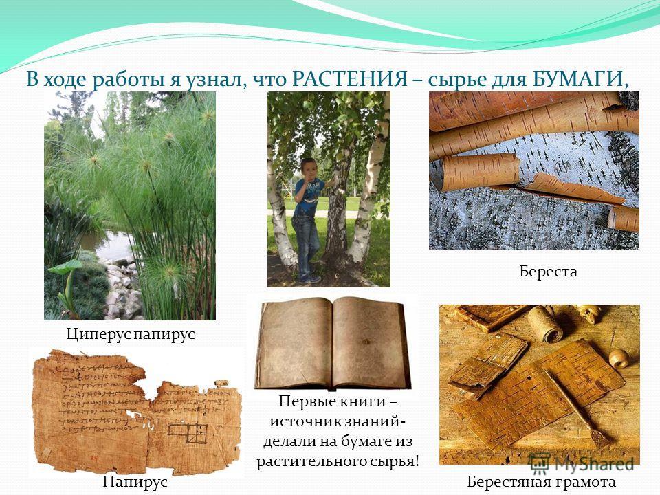 В ходе работы я узнал, что РАСТЕНИЯ – сырье для БУМАГИ, Циперус папирус Береста Берестяная грамота Папирус Первые книги – источник знаний- делали на бумаге из растительного сырья!