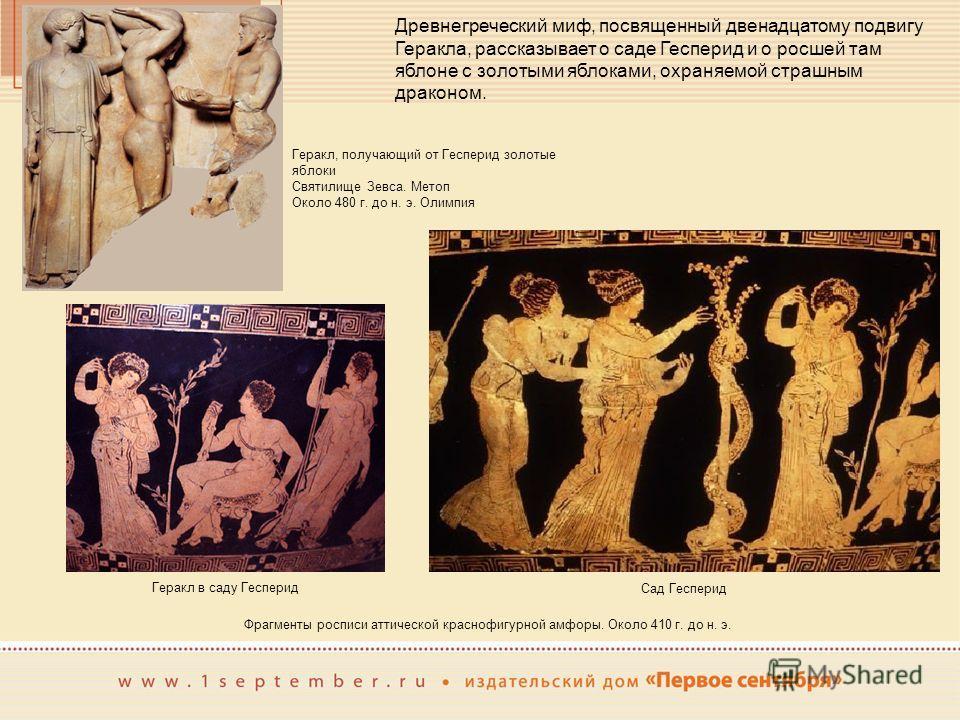 Фрагменты росписи аттической краснофигурной амфоры. Около 410 г. до н. э. Геракл, получающий от Гесперид золотые яблоки Святилище Зевса. Метоп Около 480 г. до н. э. Олимпия Древнегреческий миф, посвященный двенадцатому подвигу Геракла, рассказывает о