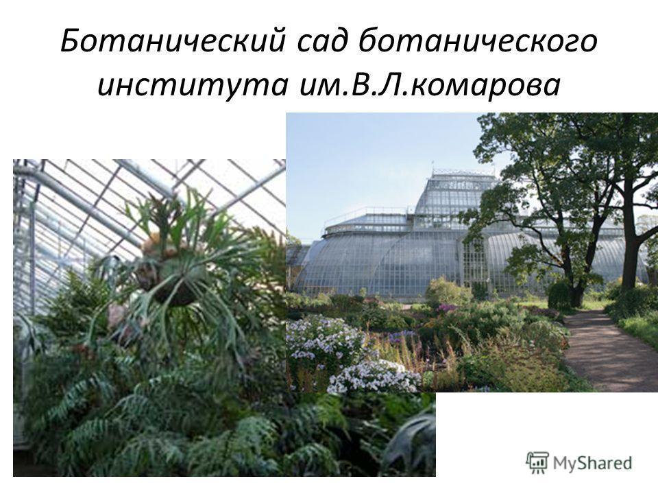 Ботанический сад ботанического института им.В.Л.комарова