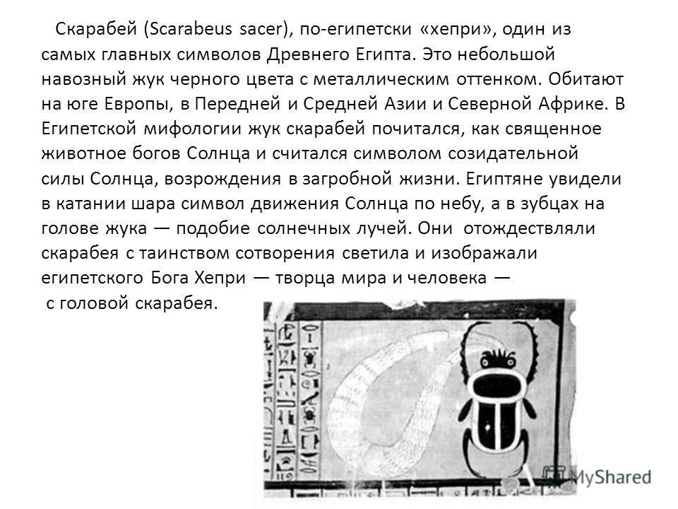 Скарабей (Scarabeus sacer), по-египетски «хепри», один из самых главных символов Древнего Египта. Это небольшой навозный жук черного цвета с металлическим оттенком. Обитают на юге Европы, в Передней и Средней Азии и Северной Африке. В Египетской мифо