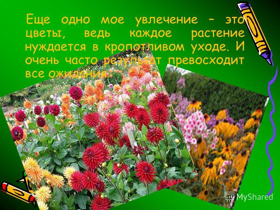 Еще одно мое увлечение – это цветы, ведь каждое растение нуждается в кропотливом уходе. И очень часто результат превосходит все ожидания.